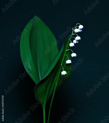Deurstickers Lelietje van dalen Lily of the valley
