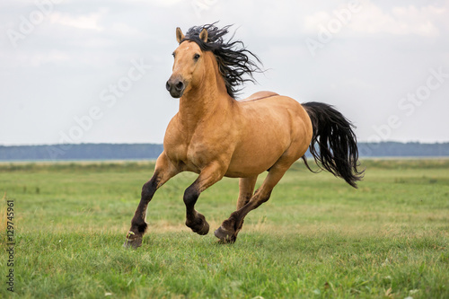 In de dag Paardrijden Bay horse running on a meadow.