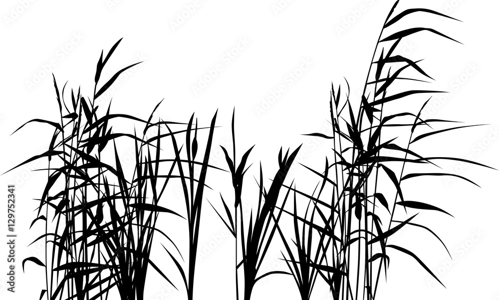 Fototapeta group of reed silhouettes isolated on white - obraz na płótnie