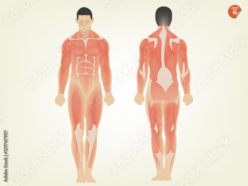 beautiful design of human anatomy front side and back side Tablou Canvas