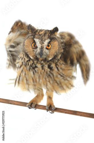 Poster Croquis dessinés à la main des animaux owl