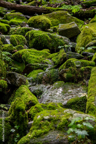 Fotografie, Obraz  Close Up of Moss Covered Rocks with Spring Creek Flowing Over Th