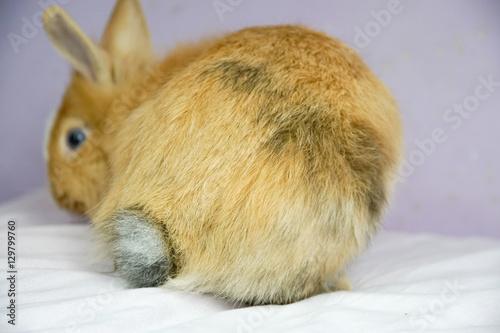 Obraz Tyłek królika - fototapety do salonu