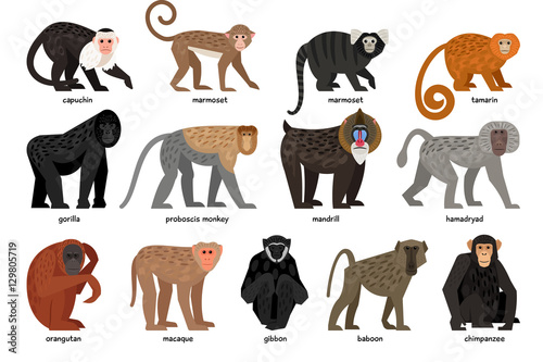 Fotografia, Obraz Big set of different Monkeys