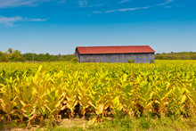Country Landscape With Barn An...
