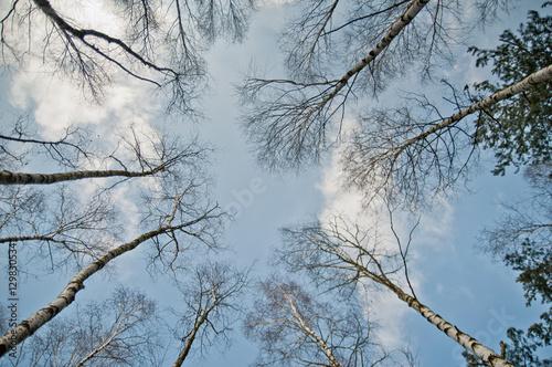 korony drzew - 129830534