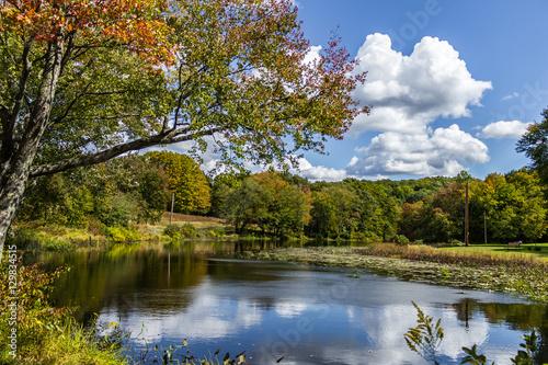Fotografie, Obraz  Autumn by the pond