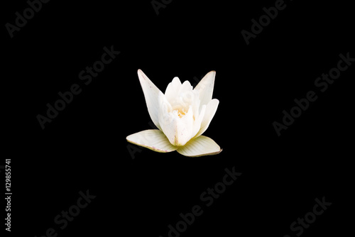 Wall Murals Water lilies White lotus