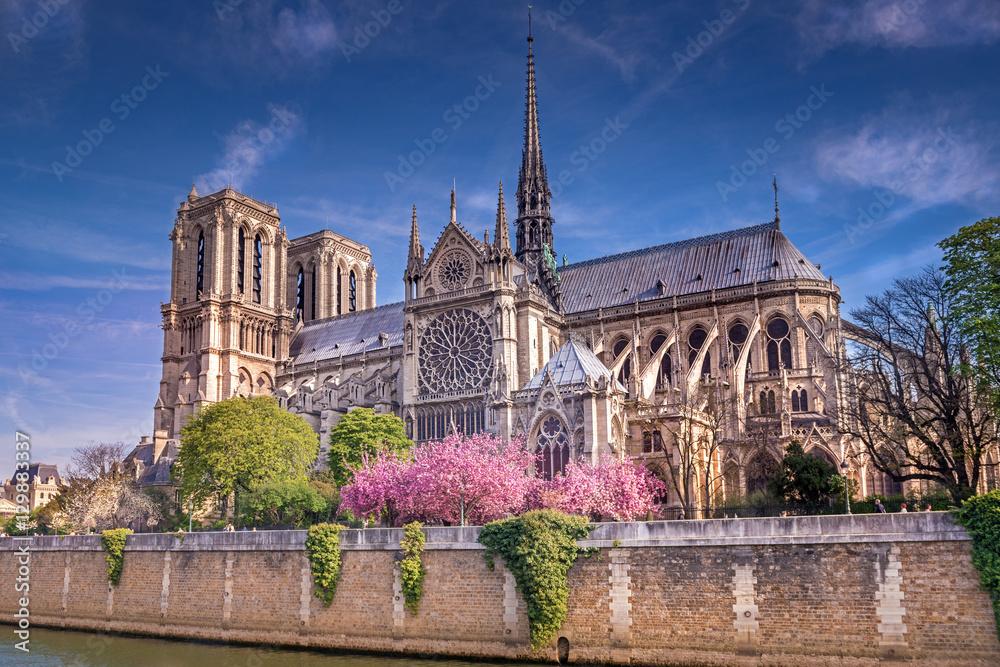 Fototapety, obrazy: Katedra Notre Dame