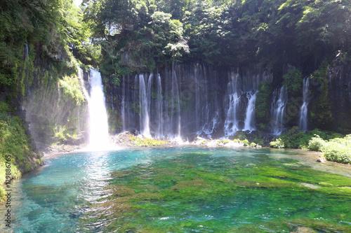 Fototapety, obrazy: 富士宮市 白糸の滝