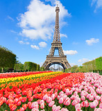 Fototapeta Eiffel Tower - Eiffel Tower in sunny day with blooming spring flowers, Paris, France