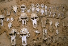 Monkey Skulls Embedded In Mud Wall To Protect Against Evil Spirits, Dogon Village Of Telle, Mali