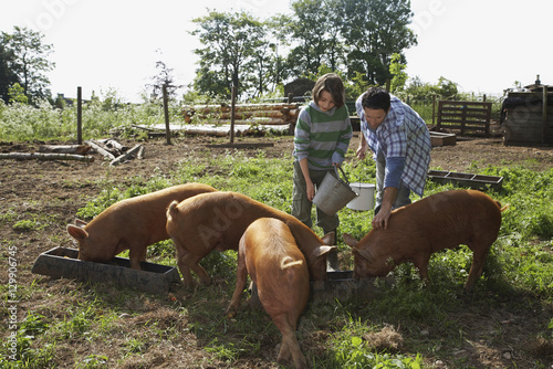 Fototapeta Father and young boy feeding pigs in sty