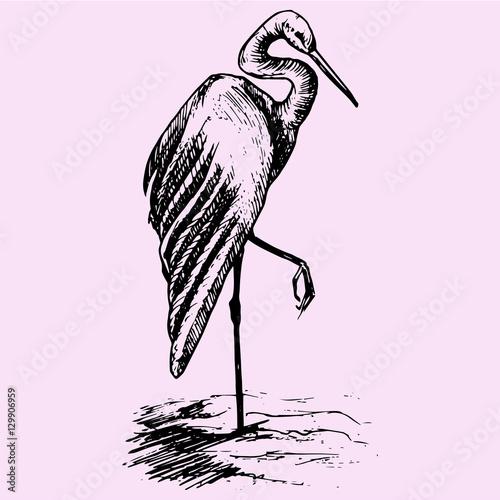Cuadros en Lienzo heron doodle style sketch illustration hand drawn vector