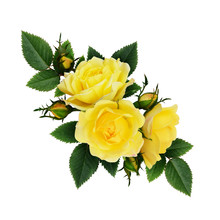 Yellow Rose Flowers Composition