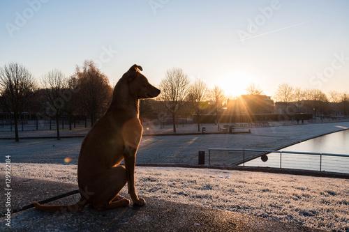 Door stickers Dog Hond kijkt over park