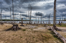 Drought Conditions At A Lake With Dead Trees And Stumps Depictin