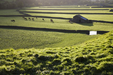 Pasture In Yorkshire Dales Yorkshire England