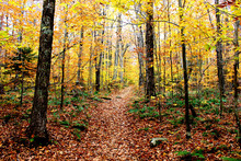 Beautiful Wooded Path In Autumn