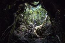 Cave In Rangitoto Island, New ...