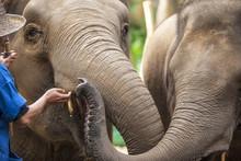 Four Seasons Elephant Camp, Northern Thailand