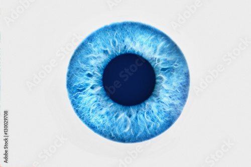 Poster Iris Closeup of blue eye on white background