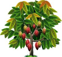 Vector Illustrations Cocoa Tree
