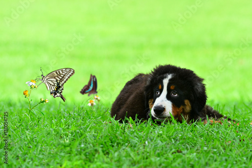 Foto auf AluDibond Schmetterlinge im Grunge Butterflies and dog in the meadow
