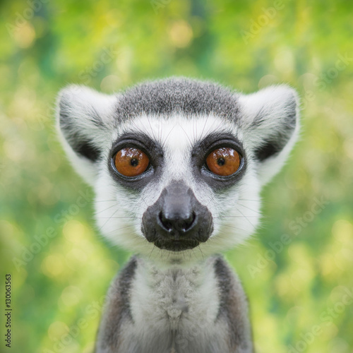 Deurstickers Aap funny lemur face close up with big eyes