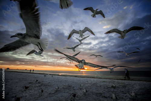 Birds in Clearwater Beach, Florida, USA - Buy this stock
