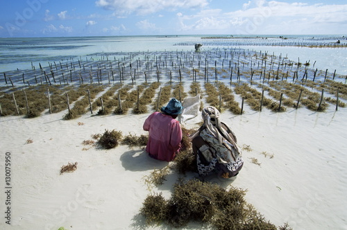 Two women working in seaweed cultivation, Zanzibar, Tanzania, East Africa, Africa
