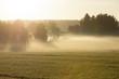 Morning fog in meadow