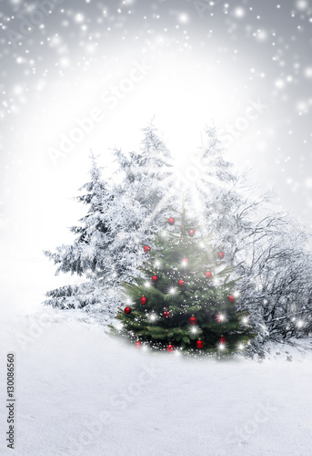 Fotografia  Weihnachtsbaum mit verschneiten Tannenbäumen