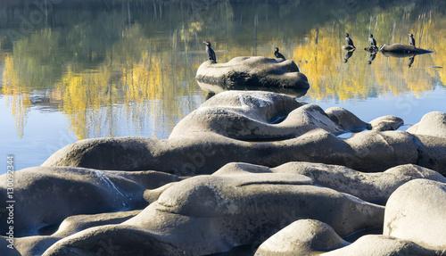 cormorants basking in the rocks