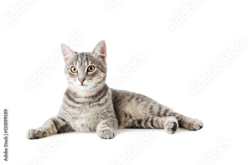 Poster de jardin Chat Beautiful grey cat isolated on a white