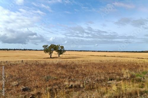Valokuva  Fields of Australian wild landscape