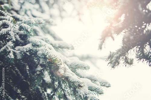 Fotografie, Obraz  Fir Branch With Snow And Sun Flare During Winter