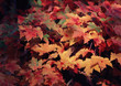 canvas print picture Colored Leaves