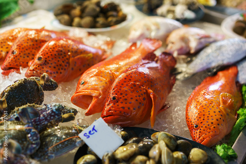 Red-banded grouper  Seafood  Tasting seafood from Thailand  Red fish