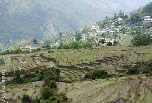 Deurstickers Rijstvelden Terraced ricefields near Kuruthang, on the Puna Tsang Chu valley beside the road from Thimpu to Punakha, Bhutan, Asia