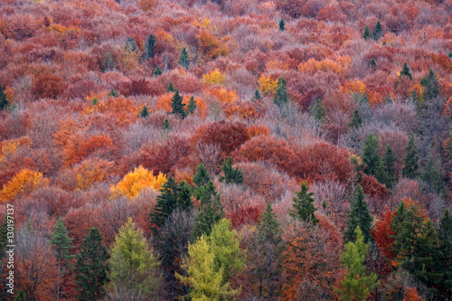 Carpathian forest in autumn Fototapeta
