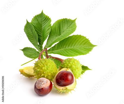 Photo Horse-chestnut (Aesculus) fruits with leawes.