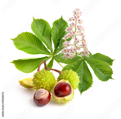 Horse-chestnut (Aesculus) fruits with leawes and flower. Wallpaper Mural