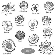 Vector Set Of Flowers, Black And White Collection
