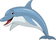 Funny Dolphin Fun