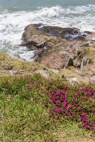 Fotografie, Obraz  Flowers at cliffs in Torres beach