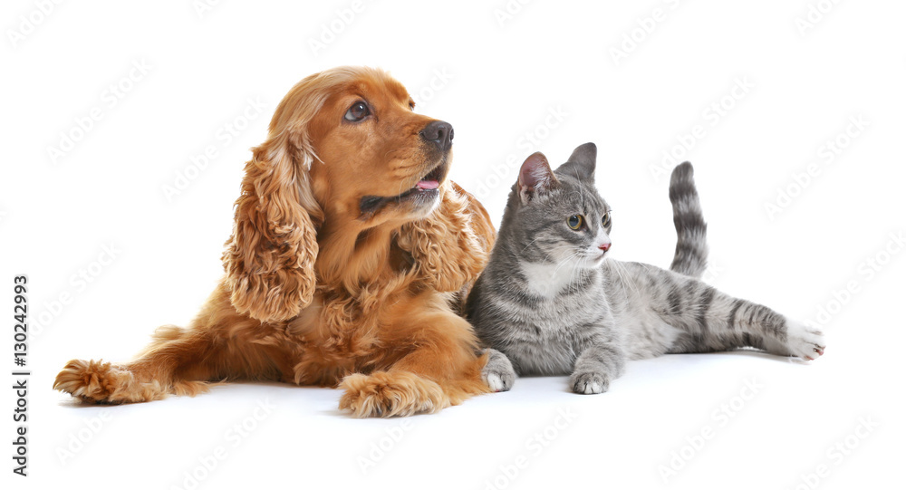Fototapety, obrazy: Cute dog and cat together on white background