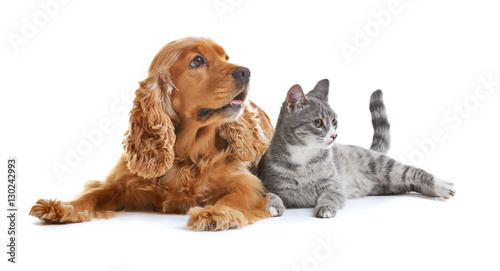 Poster Chat Cute dog and cat together on white background