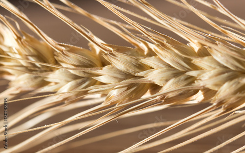 Fototapeta ears of wheat . macro obraz