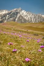Purple Flowers In Nepal